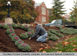 Purdue grounds worker with ornamental plants