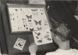 Pete Pfendler, looking at display of insects