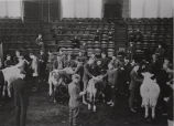 Students examining cows in lecture hall