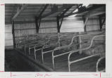 Cattle stalls inside cattle barn