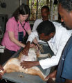 Mary Grabow working in Ethiopian vet clinic