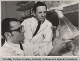Professors examining vials filled with fungus cultures