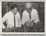 Professors examining plantings of different lots of seeds