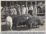 President Somoza and others observing livestock