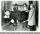President F.L. Hovde examining a Hereford steer