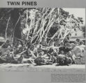 1980 Twin Pines Cooperative Composite Photograph